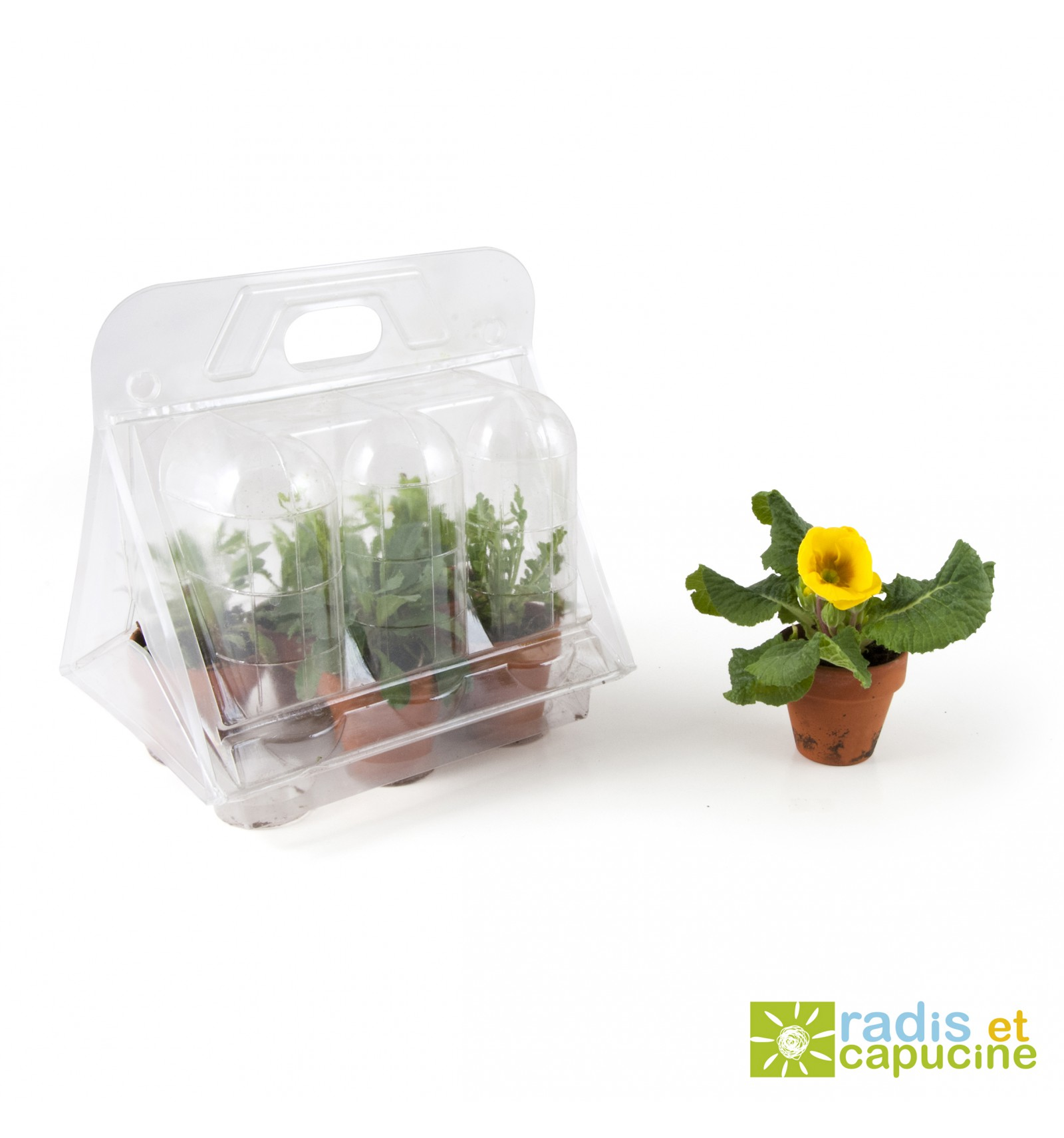 Mini zahrádka - Mini skleník s 6 květináčky - květiny