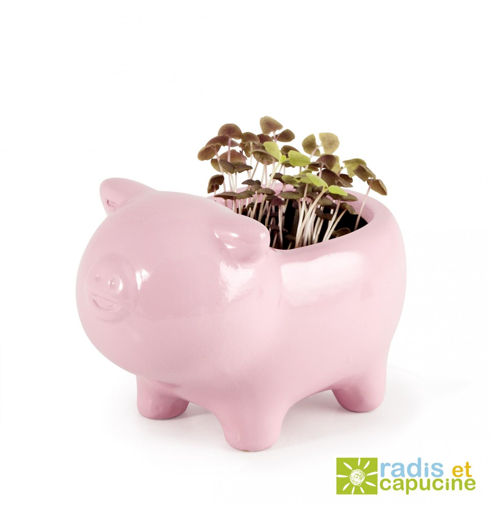 Mini zahrádka - Zvířátkový květináč prasátko- Bazalka
