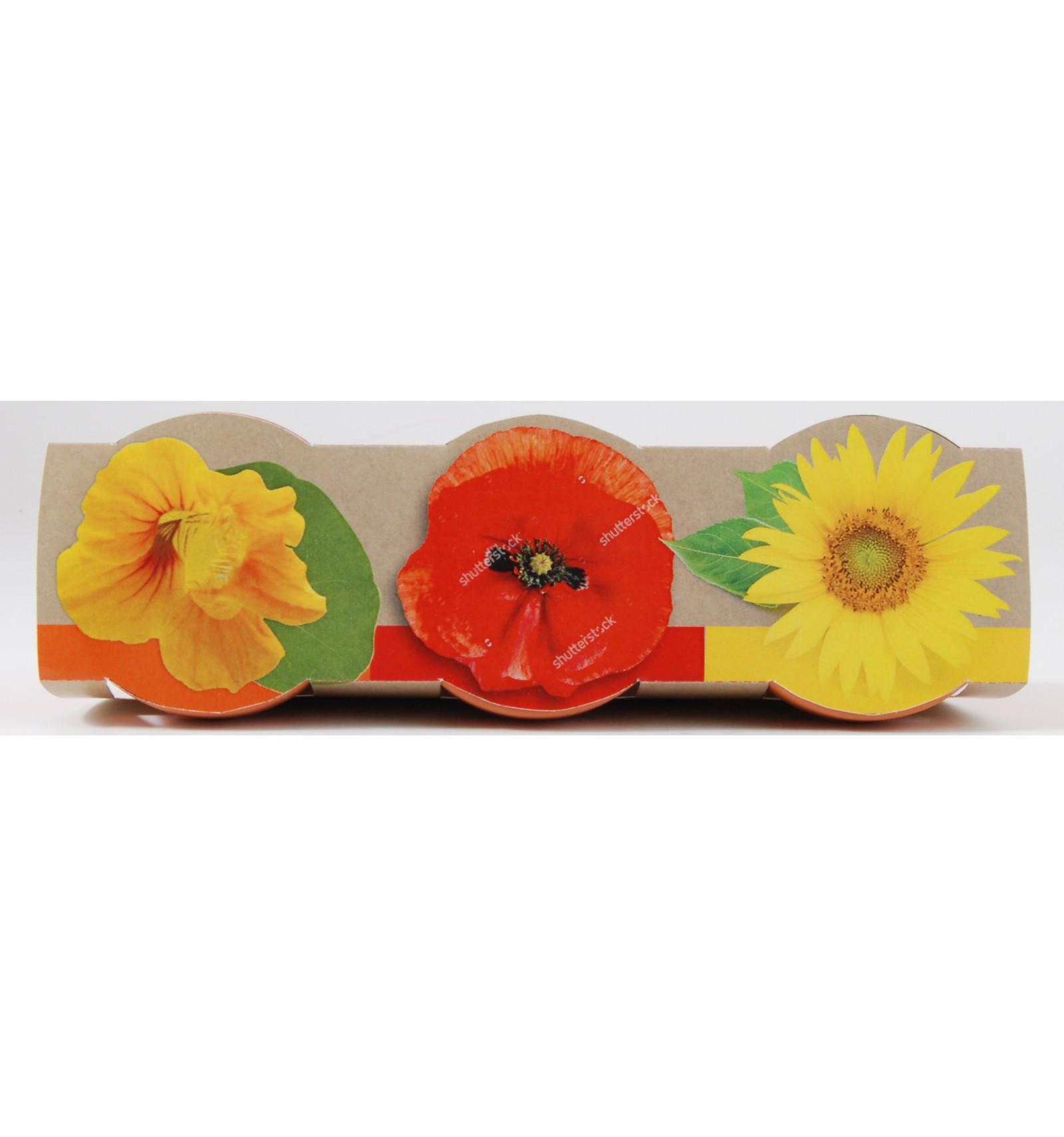 Mini zahrádka - Trio Mini květináče s květy mix