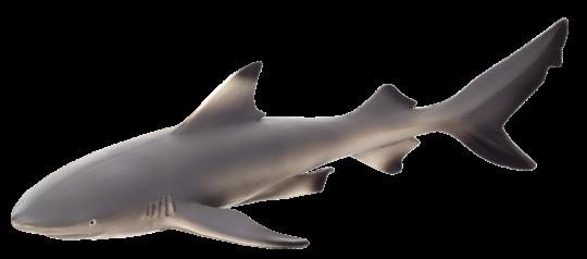 Mojo Animal Planet Žralok černoploutvý