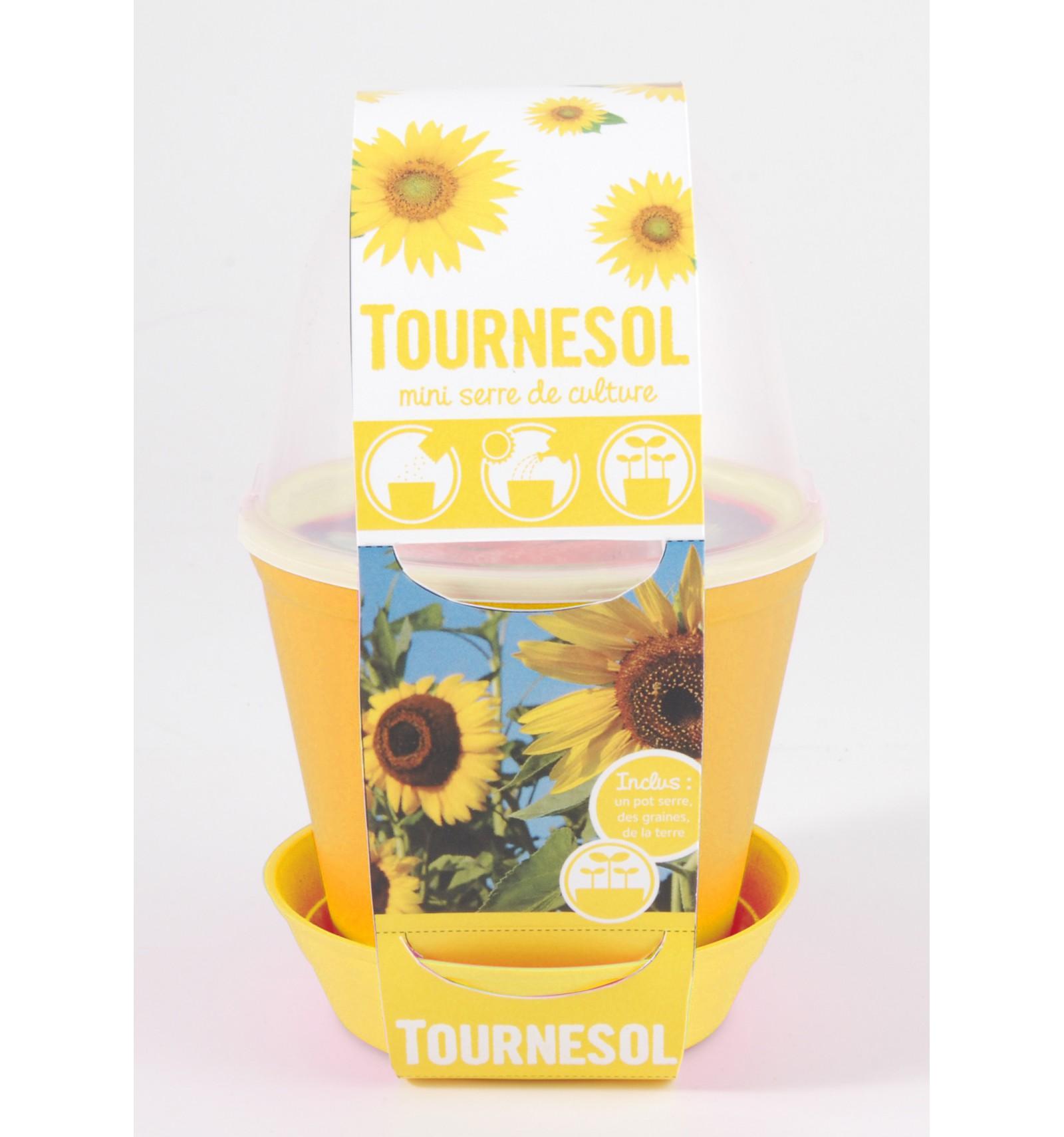 Mini zahrádka - Květináč Bell se slunečnicí